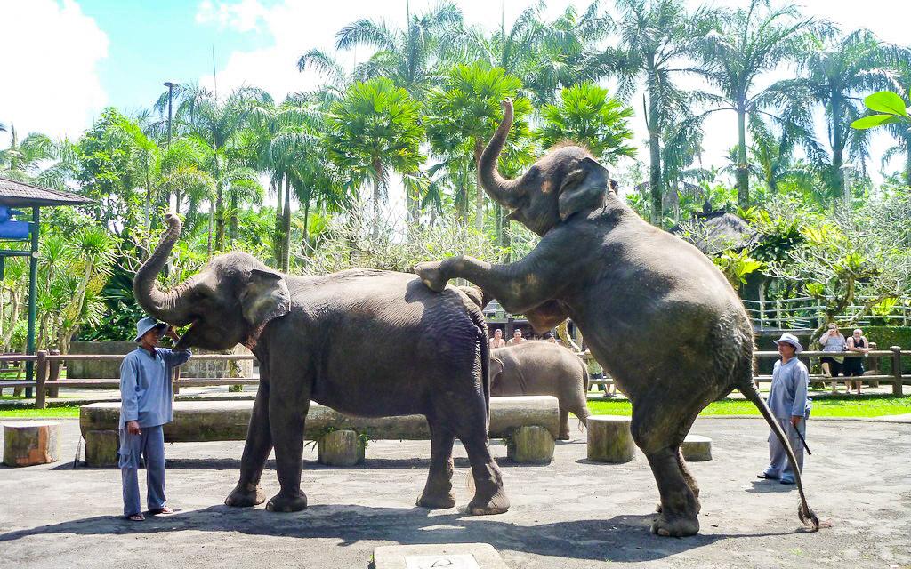Er du en dyrevenlig turist? (c) Ryan Buterbaugh, Flickr Creative Commons